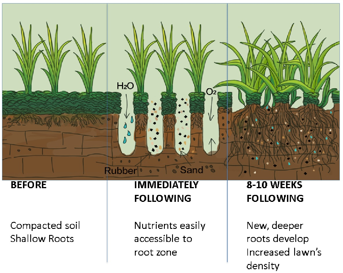 Drill and Fill Root Growth